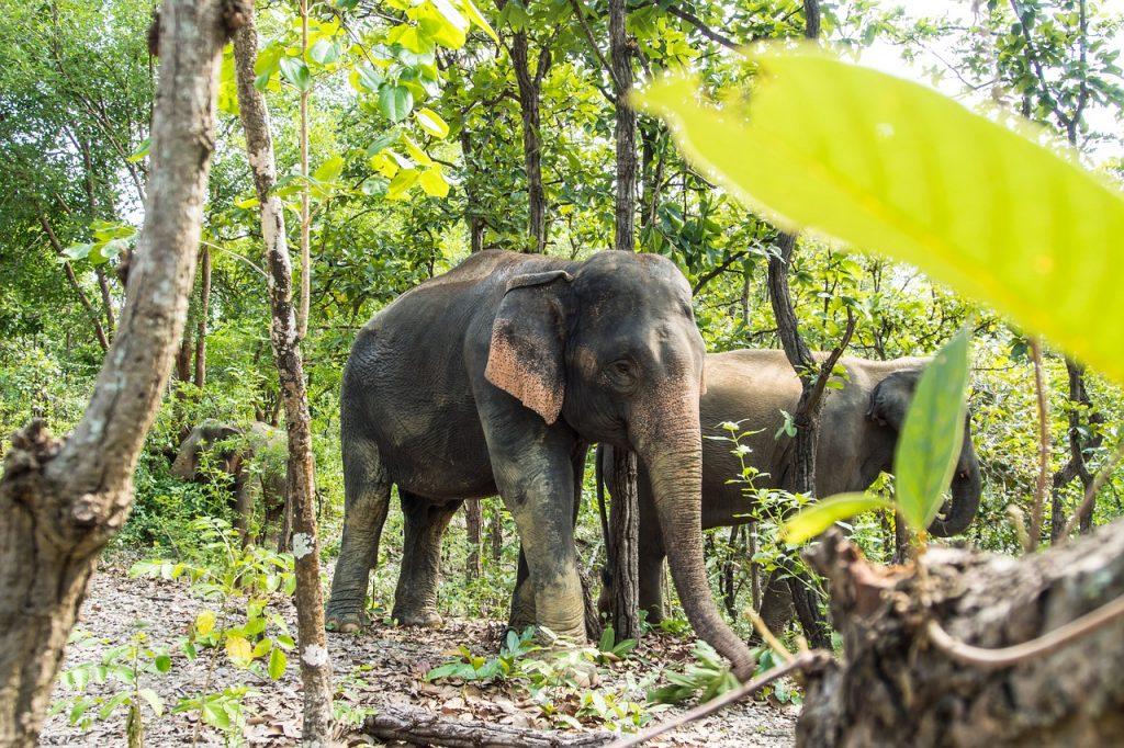 asia, wildlife, wild